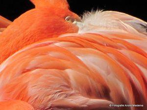 Lees meer over het artikel Flamingo dierentuin Emmen