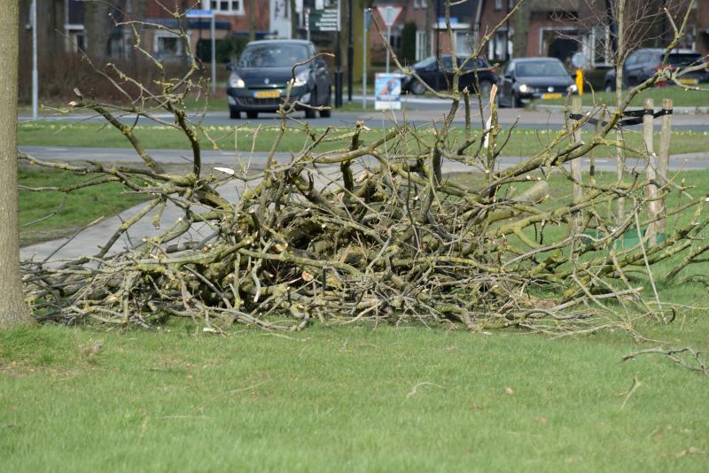 bomen gekapt 3